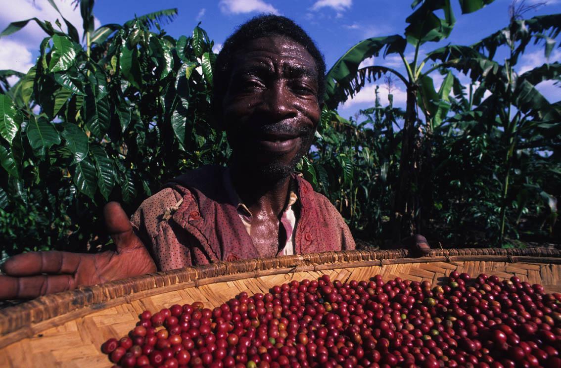 Pěstitel Fair Trade kávy se může usmívat