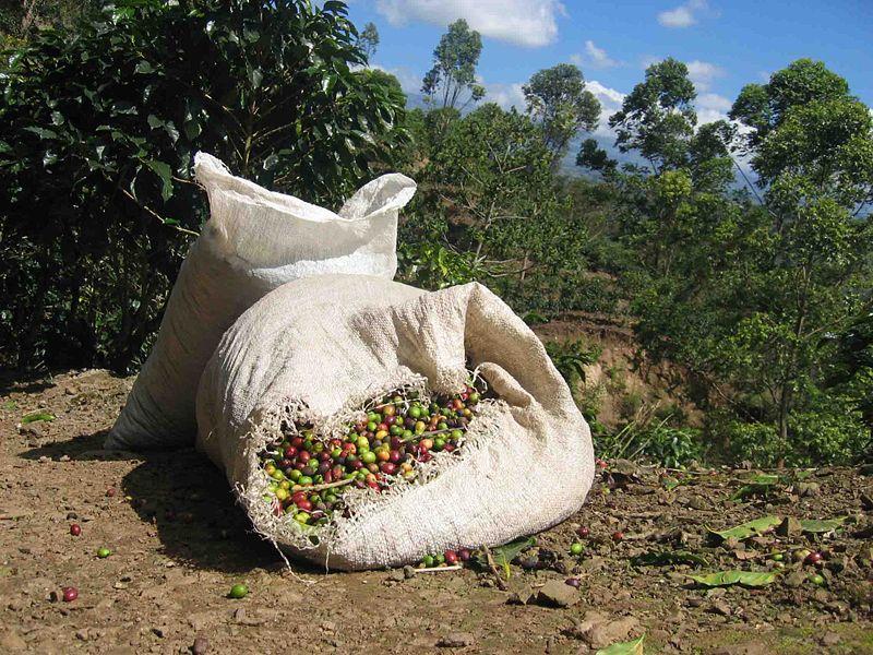 čerstvá kostarická káva