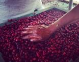Je Fairtrade opravdu férový obchod?